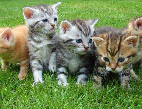 'เลี้ยงแมว' เพิ่มความสุข ลดเสี่ยงโรคหัวใจ