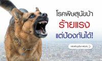6103-dog-01