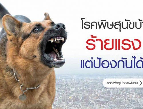 โรคพิษสุนัขบ้า ร้ายแรง แต่ป้องกันได้!