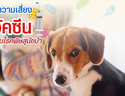โปรโมชั่นฉีดวัคซีนป้องกันโรคพิษสุนัขบ้า (Speeda)