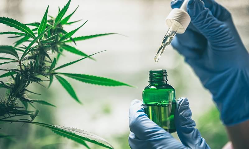 6308-cannabis